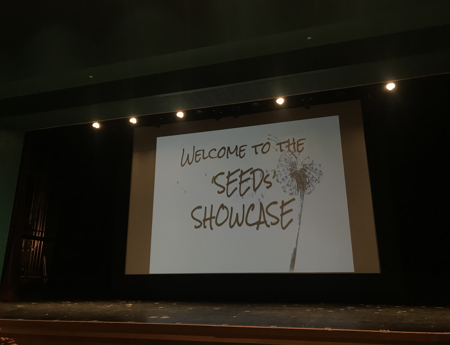 Pictured above, The Seeds Showcase logo.