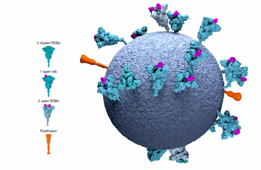 Image created to illustrate Pfizer Vaccine